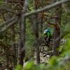 Schöner Trail im Wald